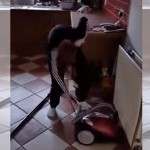 This Boy's Struggle To Switch On A Vacuum Cleaner Will Make You Smile Until Your Face Hurts