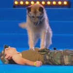 Yes, This Is A Dog Giving His Owner CPR And It's Absolutely Remarkable To Watch