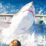 This Great White Shark Broke Into A Diver's Cage While A Tourist Was Still Inside It… OMG
