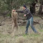 This Man Actually Punched A Kangaroo To Save His Dog From Being Strangled (Yes, You Read Right)