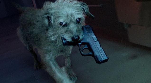 Afbeeldingsresultaat voor dog assassin