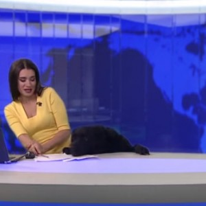 This Dog Just Crashed A Live News Broadcast And Became An Internet Star