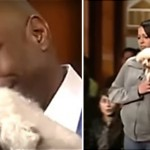 This Judge Let The Dog Loose In The Courtroom To Identify His Real Owner. The Result Will Make You Cry