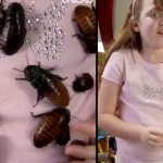 Meet The Girl Who Is Obsessed With Collecting Cockroaches (Yes, You Read Right)