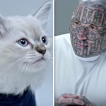 These Thugs Took On A Kitten In A Blinking Game. You Won't Believe Who Actually Won