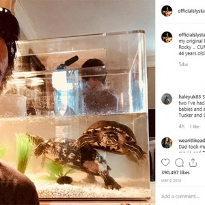 Sylvester Stallone Still Owns The 45-Year-Old Turtles From 'Rocky'… Yes, You Read Right