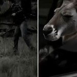 The Aussie Kangaroo Who Recently Got Punched Just Released A Badass Gangsta Movie Trailer