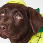 Kmart Just Release These $7 Pet Costumes And You Need To Buy One Right NOW