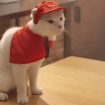 OMG! Pizza Hut In Tokyo Employs Actual Cats (Yes, You Read Right)