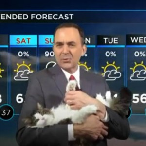 This Weatherman's Cat Decided To Join His Broadcast And The Footage Goes Viral