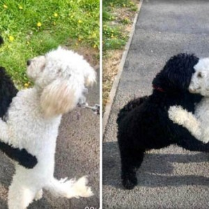 Dog Siblings Separated As Puppies Reunite At The Park & Starts Hugging Instantly!